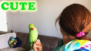 Parrots Playing Peekaboo Compilation