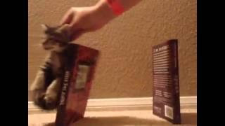 vine video wrecking ball kitten edition