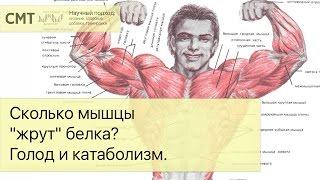 Сколько мышцы
