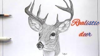 deer realistic easy