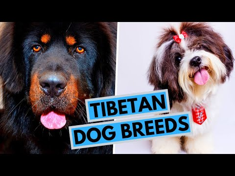 All Tibetan Dog Breeds