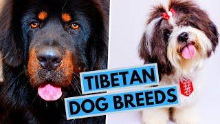 All Tibetan Dog Breeds
