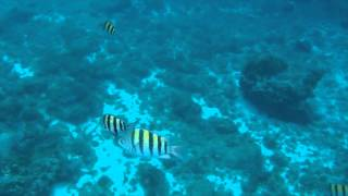 Brilliance of the Seas Cozumel 3 Reef Snorkel