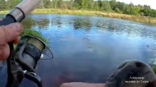 рыбалка с фидером на Мологе