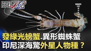 發綠光的螃蟹、異形蜘蛛蟹 印尼深海驚現「外星人物種」!? 關鍵時刻20180517-5 黃創夏 劉燦榮
