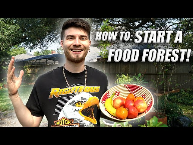 How To Start A Food Forest in the Suburbs! Full DIY Tutorial!