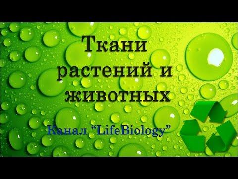 Видеоурок биология 6 класс ткани растений и животных