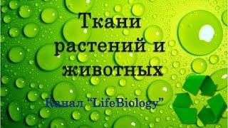 Ткани растений и животных(Ткани животных У животных выделяют четыре типа тканей: эпителиальные, мышечные, ткани внутренней среды..., 2015-03-19T13:37:15.000Z)