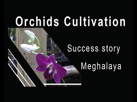 Orchids Cultivation in North East India