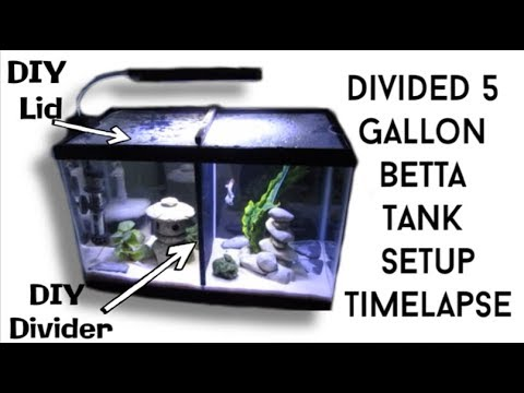 Setting Up Divided Betta Tank Time-lapse || DIY Tutorials || Betta Name Reveals