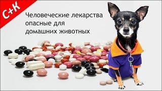 Человеческие лекарства опасные для домашних животных.
