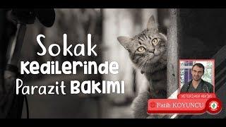 Sokak kedilerinde parazit bakımı