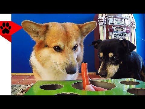 Playing Hot Dog Game with Dog Buddies | Dog prank