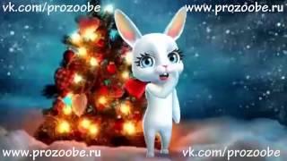 Подругу С Новым Годом! ❆❆❆ Красивое поздравление от ZOOBE Зайки Домашней Хозяйки