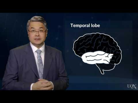 Brain Model 01из YouTube · Длительность: 5 мин29 с