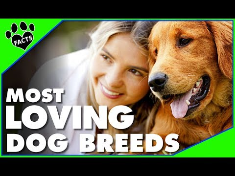 TopTenz: Top 10 Most Affectionate Loving Dog Breeds  Dogs 101 - Animal Facts