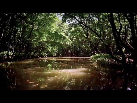 BANKING NATURE Trailer
