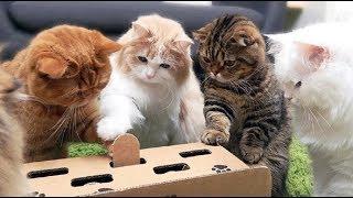 猫の動きが面白い&ほんわかイヌ&ネコ 楽しく癒されムービー♪ 続きは動...
