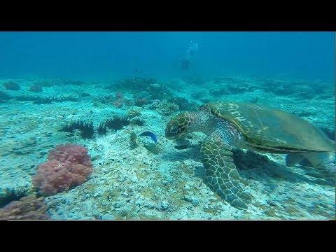 "Plongées à Oman""Daymaniyat islands"" 2015 - Dive In Oman"