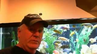 African Cichlid Tank 125 Gallon, Update Shout Out, New Fish, New Life Spectrum Ultra Red