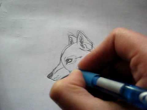 Dibujo Lobo Wolf Drawing Youtube