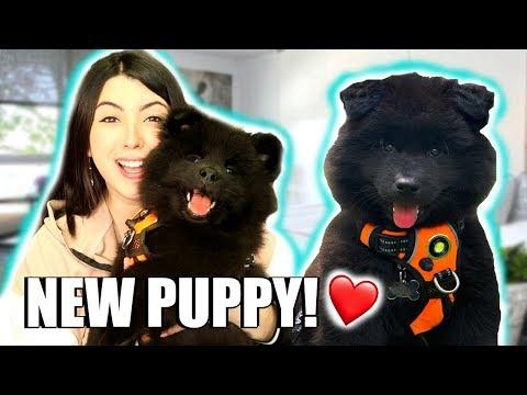 I GOT A NEW PUPPY!!! New Pet Puppy Q&A | EMZOTIC