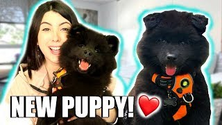I GOT A NEW PUPPY!!! New Pet Puppy Q&A | EMZOTIC