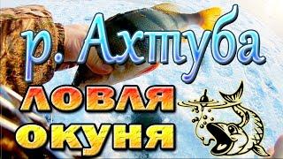 Ловля окуня зимой на р Ахтуба Рыбалка в Астраханской области