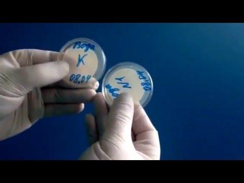 Результаты исследований проб питьевой воды на ОМЧ и ОКБ