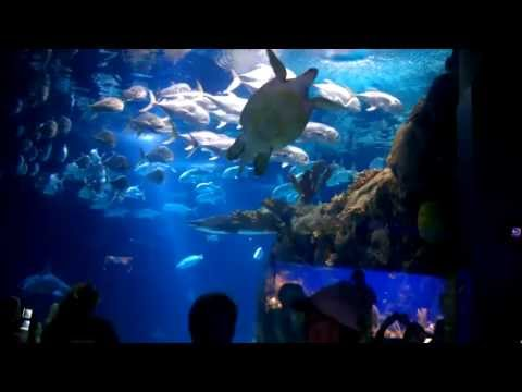 Henry Doorly Zoo Scott Aquarium Pt. 2