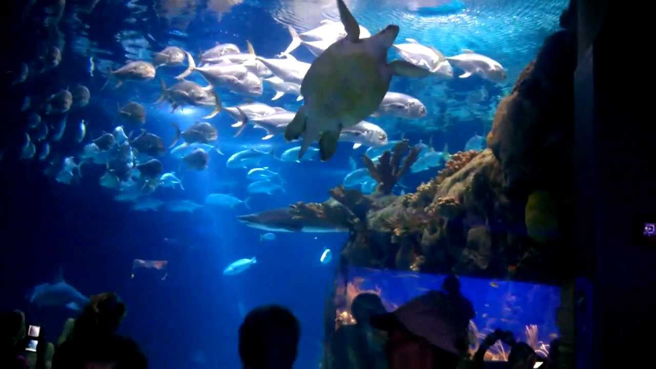Henry Doorly Zoo Scott Aquarium Pt 2 Youtube