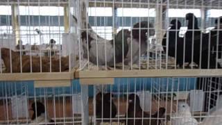 2 марта 2014 г.  5-я выставка голубей певчих и декоративных птиц им. Брагина А.С. г. Донецк.