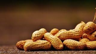Выращивание арахиса в открытом грунте как бизнес