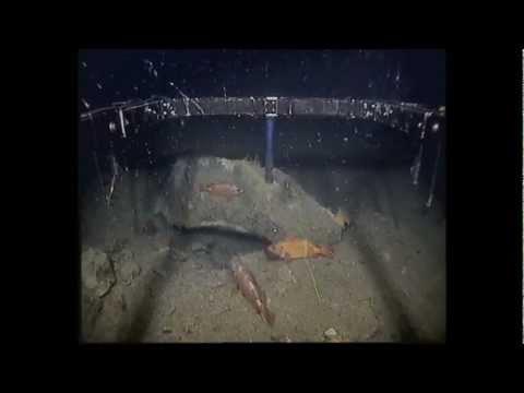 under water Barents