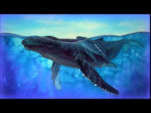 ♒ Relaxing Whales Song