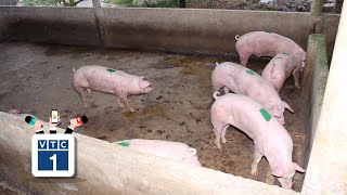 """""""Giải cứu"""" thịt lợn: Ưu tiên thu mua, cấp trữ"""
