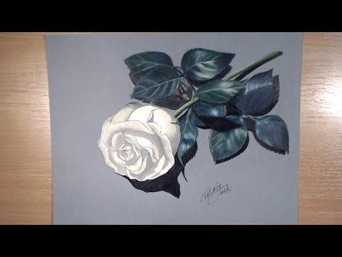 Drawing A Rose Colored Pencil