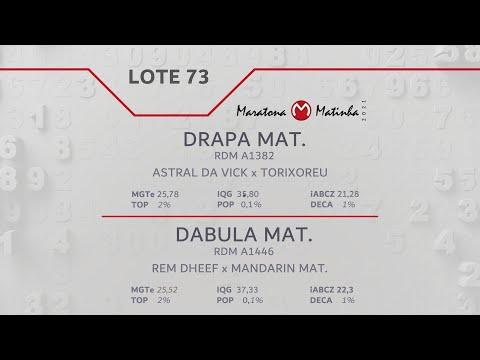 LOTE 73 Maratona Matinha