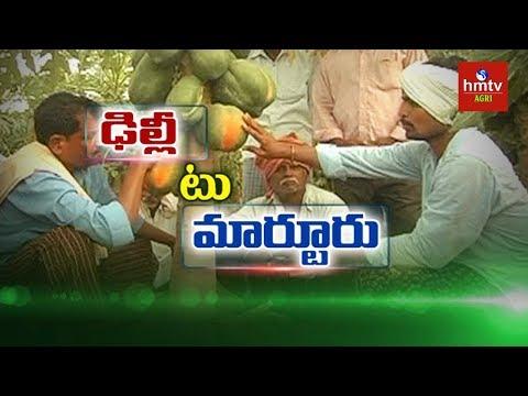 Natural Farming | Techie Success Story in Papaya Farming | hmtv Agri