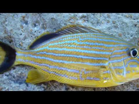 Reef Fishing Cayman Islands