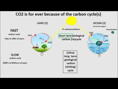 Carbon cycle(s): why CO2 is forever