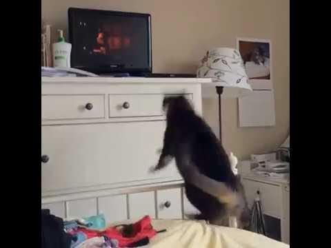 Black Cat Dresser Jump Fail | Collab Clips