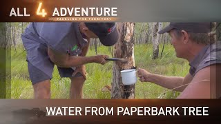 Water from the paperbark tree ► All 4 Adventure TV