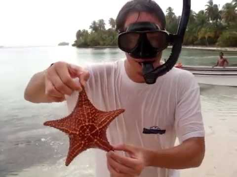 Panama star