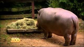 Hippo, lion et cigogne - Episode 14 (Saison 2)