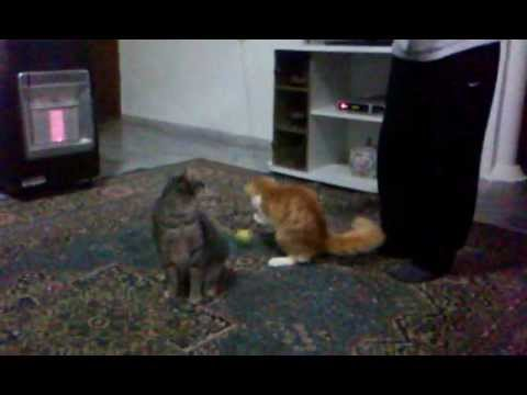 """Cats Circus Show """"In the House """""""