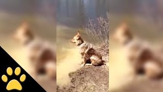 German Shepherd Throws A Fit When She Has To Quit Swimming