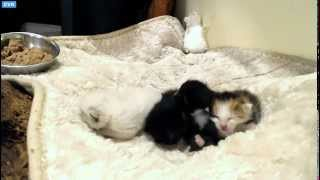 Tiny Kittens Shelly Visits Sloan's Kittens Junie Has Eye Discharge