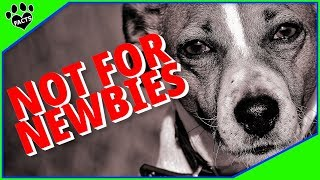 Difficult Small Dog Breeds  Not for Newbies