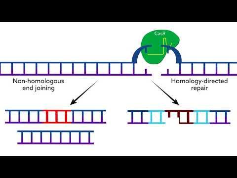 Making CRISPR-Cas9 work in the brain